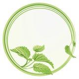Biological circle Stock Photo