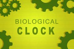 BIOLOGICAL CLOCK concept. BIOLOGICAL CLOCK sign concept illustration with green gear wheel figures on yellow background Royalty Free Stock Photo