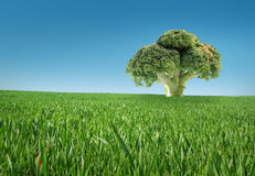 Biological food. Broccoli biologic fresh food, vegetables funny like a tree stock images