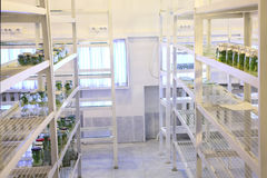 Biological laboratory. Laboratory workplace for creating modern transgenic plants stock images