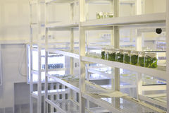 Biological laboratory Stock Photo
