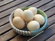 Biological organic naturally white eggs in a green blue colourful basket on a wooden table royalty free stock image