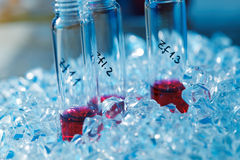 Biological Samples royalty free stock images