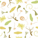 Biological seamless vector pattern Royalty Free Stock Photos