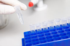 Biological solution in eppendorf. Laboratory micro pipette drops the biological solution in eppendorf royalty free stock photo