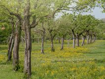 Biologiczny sad w Niemcy - Bavaria obraz royalty free