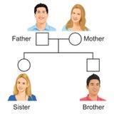 Biologie - versiyon 01 d'arbre généalogique illustration libre de droits