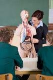 Biologieunterricht stockfoto