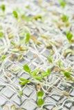 Biologisch experiment met kiemen in het laboratorium stock foto