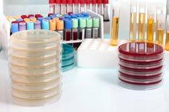 Biologisch monster op de werkbank in de microbiologielaborator stock afbeeldingen