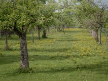 Biologische boomgaard in Duitsland - Beieren stock foto
