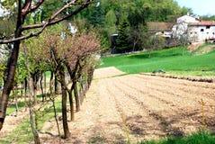 Biologische landbouw Stock Foto
