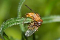 Biologische Peststeuerung. Lizenzfreie Stockbilder