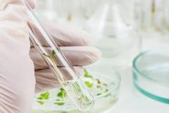 Biologische wetenschappen Royalty-vrije Stock Fotografie