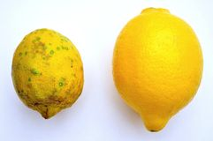 Biologisches Lebensmittel gegen GVO-Lebensmittel: Zitronen Stockfotografie