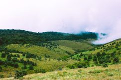 Biologisk mångfald av Horton Plains National Park, Sri Lanka royaltyfri foto
