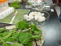 Biologiska förberedelser, silkesmaskar Arkivbild
