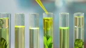 Biologist adding yellow liquid to plant in tube, human impact on environment