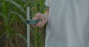 Biologist or agronomist, measure the size of the corn field.