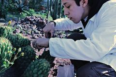 Biologist. A biologist collecting cactus samples on a hiking Royalty Free Stock Photography