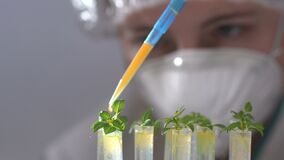 Biologist drops fluid into test tube with plant specimen.