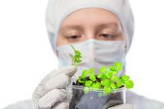 Biologist exploring a plant been grown in the laboratory Royalty Free Stock Photography