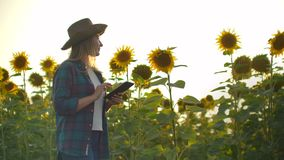The biologist girl in a had is observing sunflowers in summer day on the field