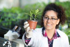 Biologist holding pot with sprout Royalty Free Stock Images
