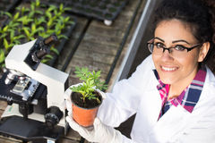 Biologist holding pot with sprout Royalty Free Stock Photo