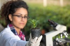 Biologist holding pot with sprout Stock Photo