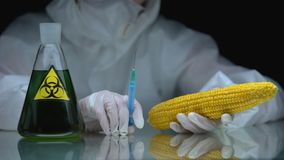 Biologist holding syringe and corn, flask with biohazard liquid on table, toxin
