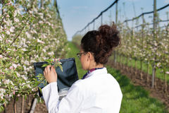 Free Biologist In Blossoming Orchard Stock Photos - 90430543