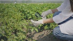 Biologist inspecting pests
