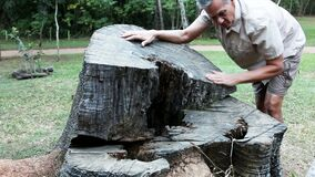 Biologist inspecting the rings on a tree