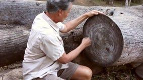 Biologist examine Rings on a Tree
