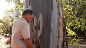 Biologist examine the bark of a Eucalyptus tree