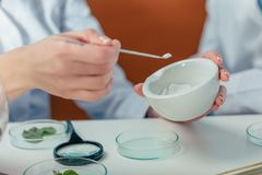 Biologist with petri dishes. Cropped view of biologist working with powder and leaves in petri dishes in lab Stock Images