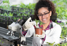 Biologist pouring chemicals in pot with sprout Royalty Free Stock Images