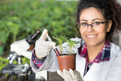 Biologist pouring chemicals in pot with sprout Stock Images