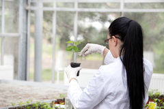 Biologist pouring liquid into flower pot with sprout Royalty Free Stock Photography