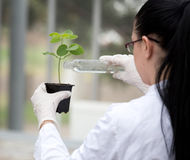 Biologist pouring liquid into flower pot with sprout Stock Images