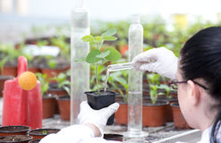 Biologist pouring liquid into flower pot with sprout Royalty Free Stock Images