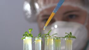 The biologist pours the reagent into test tubes with plants.