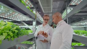 Biologist puts sprout in test tube for laboratory analyze. Two scientists stand in greenhouse. They are dressed in white. Uniform, disposable gloves and eye stock video footage