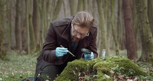 Biologist in rubber gloves examining moss at forest