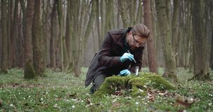 Biologist in rubber gloves taking part of moss for studying