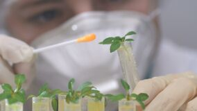 A biologist scientist applies a reagent to the leaves of plants in test tubes.