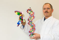 Biologist shows DNA and mRNA. Biology teacher showing DNA and mRNA artificial model royalty free stock photos