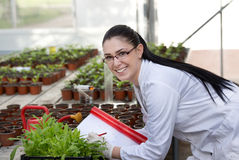 Biologist with sprouts in greenhouse Royalty Free Stock Images