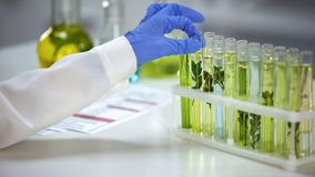 Biologist taking tube with plant in preservation liquid, influence on nature. Stock photo royalty free stock photography